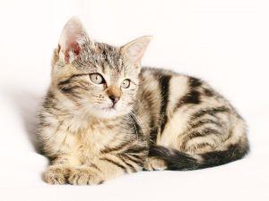 ペットやお気に入りの品の扱いのサムネイル画像