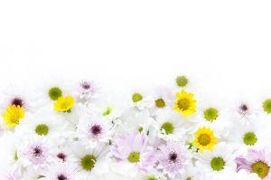 オンライン葬儀でも供花を送ることはできるのサムネイル画像